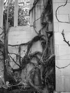London - St Dunstan's - Vines