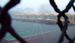 School Buses in the Fog