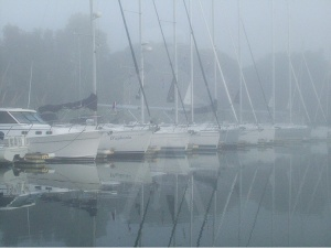 Foggy Marina Line-Up