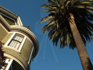 Victorian and Palm Tree