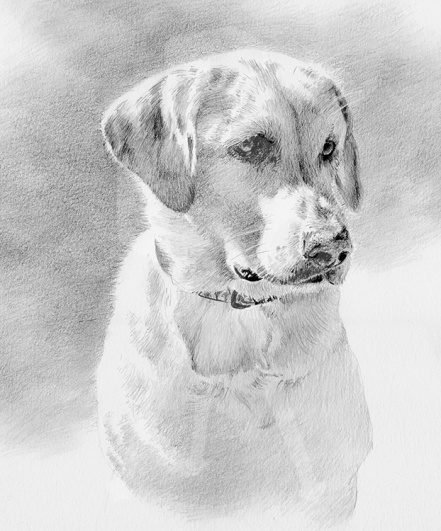 Golden Retriever Mutt - Graphite